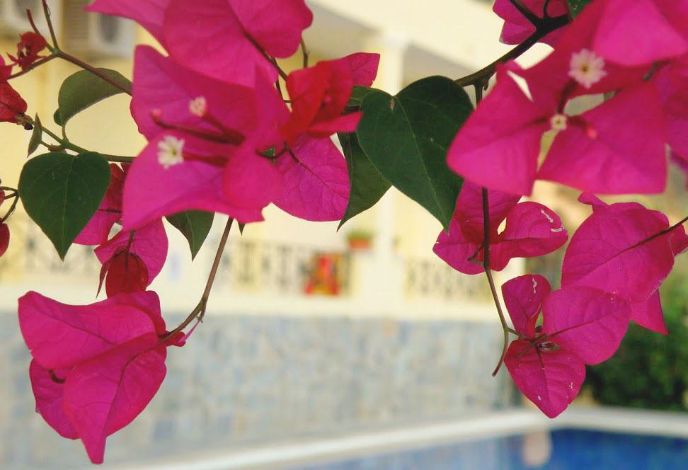 Griekenland: Dit zijn de mooiste plekjes op Corfu