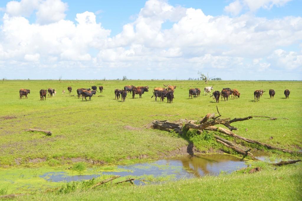 Flevoland: Op safari in de Oostvaardersplassen